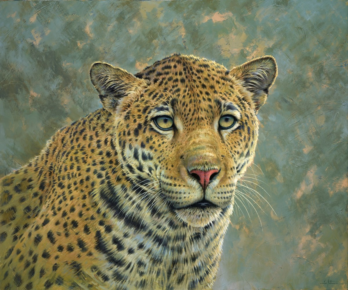 A Leopards Stare